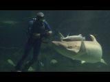 Океанариум Адлера. Корм акулы. Ноябрь 2012